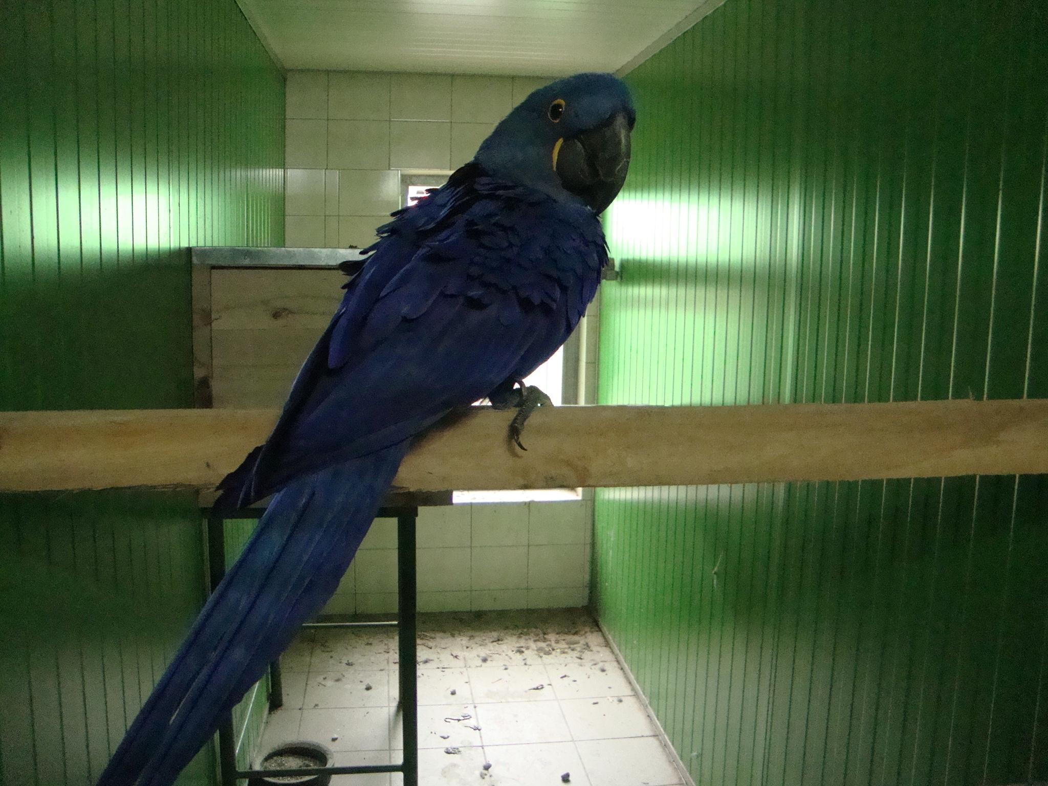 Amazon Parrot Species Parrot Breeders Interview