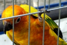 What is the ordered aviary size for breeding of parrots in Germany?