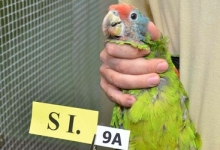 Parrot breeders vs. authorities related to nature conservation