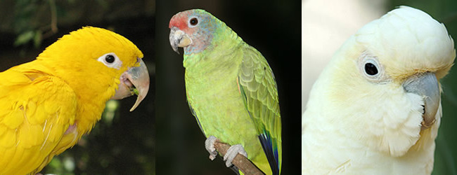 Numbers of CITES I parrot species kept in the Czech Republic 2013/2014