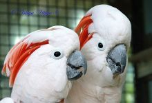 Interview with an owner of bird aviaries in France about parrot breeding