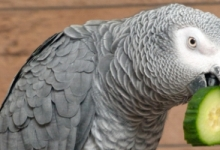Dangerous toys which can hurt your parrot