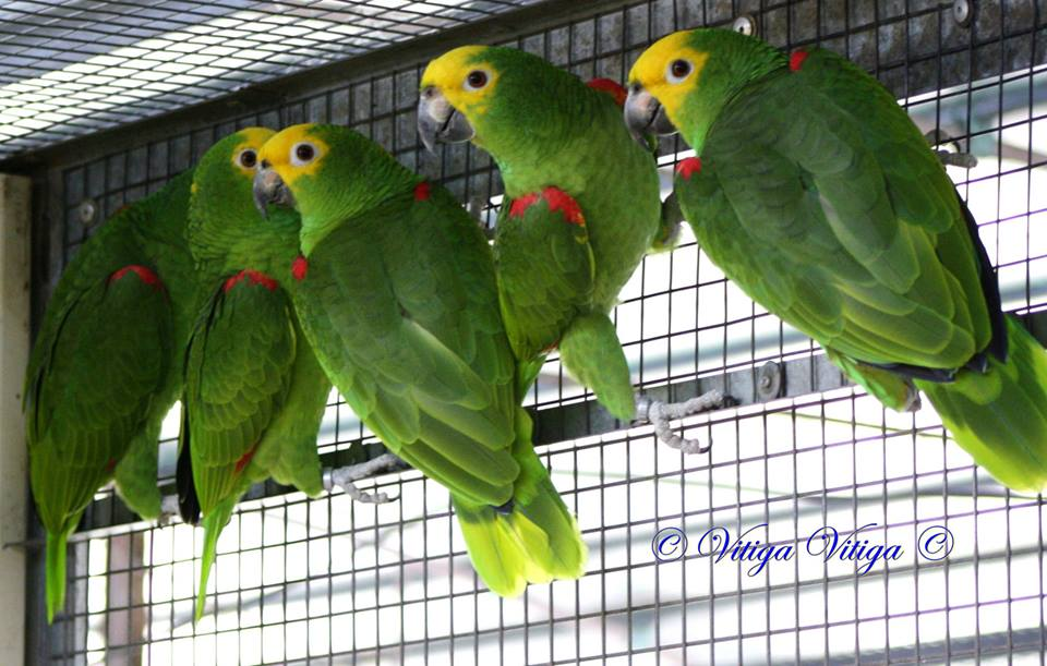 Bird Aviaries in France for parrots | Parrot Facts | Interview