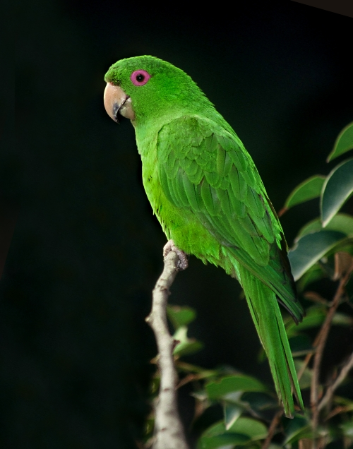 Conure - Collected And Unheard