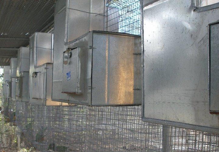 golden conure facility