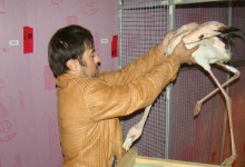 Interview with David T. Longo, the successful exporter and breeder of parrots. PART II