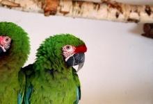 Ondrej Stafek: My passion are green parrots, especially amazons. PART I
