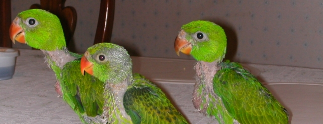 Tony Silva: Parrot Hand-feeding. PART II