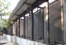 Tony Silva NEWS: Aviculture in India