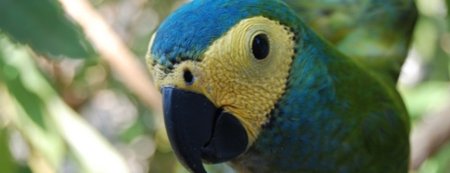 Tony Silva NEWS: Red-bellied Macaw expedition