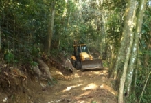 Bulldozers are destroying the natural habitat of the Santa Marta Conure