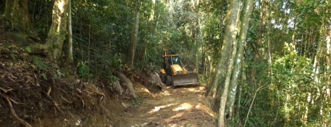 Bulldozers are destroying the natural habitat of the Santa Marta Conure