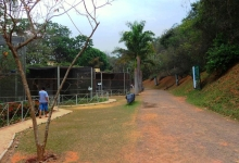 Tony Silva NEWS: Aviculture in Brazil