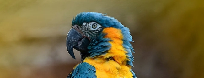 """Tony Silva NEWS: Questions and answers. """"My macaws feed each other and mate, but they do not lay eggs."""""""