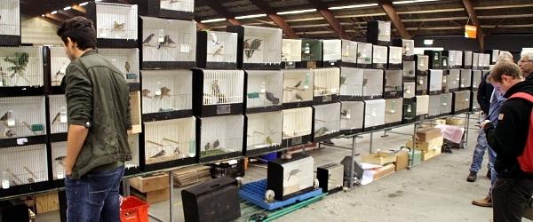 PHOTOREPORT from the biggest European birdmarket in Zwolle