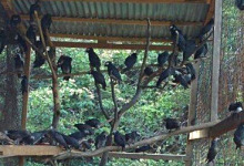 Senegal police arrested an international bird trafficker
