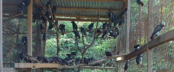 Senegal police arrested an international bird trafficker