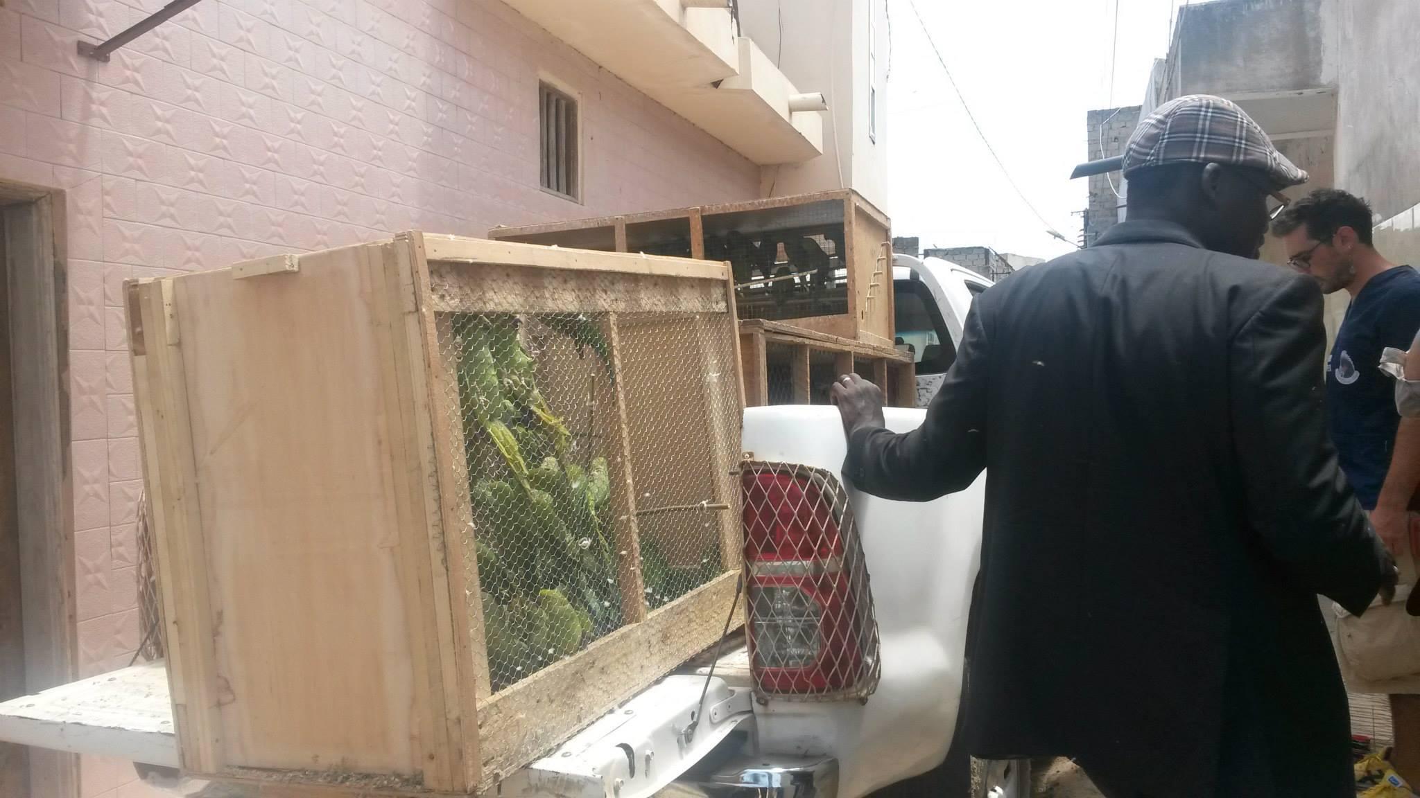 smuggling Dakar5
