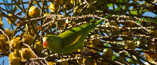 Tony Silva NEWS: All about the parrot diet. PART II