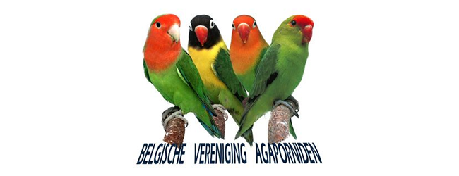 Presentation of BVA bird club