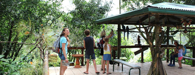 Visit of Birdworld Kuranda – an amazing Australian bird park