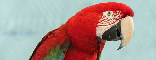 WPT seeks volunteers for Red and Green Macaw conservation project in Argentina