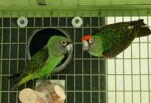 What is the appropriate nest design for our parrots? PART I