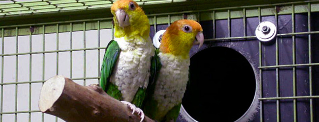What is the appropriate nest design for our parrots? PART II