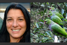 Vanessa Kanaan: We have already released more than 70 Vinaceous Amazons back into the wild