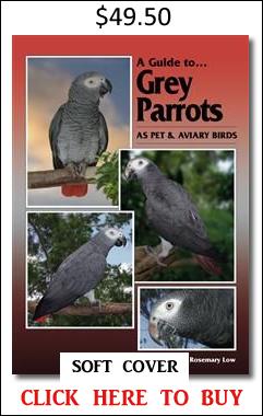 Grey Parrots soft