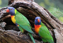 "Q & A: ""What's the cause of infertility in parrots?"""