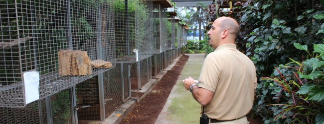 Interview with Juan Cornejo, curator of the most complete parrot collection in Loro Parque. PART I