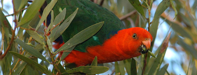 "Q & A: ""How should we feed our parrot in breeding and non-breeding season?"""