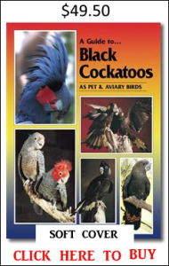 Black Cockatoos soft