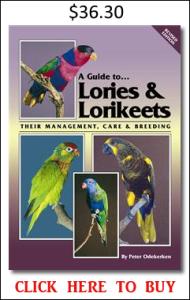 Lories Lorikeets