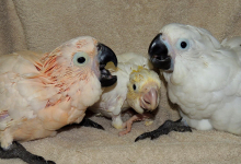 "Q & A: ""How to choose the best incubator for parrot rearing?"""