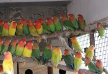 "Q & A: ""Can parrots be bred successfully indoors?"""
