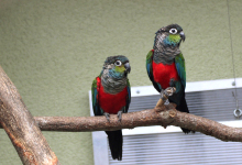 "Q & A: ""Why is my pair of parrots not breeding?"""