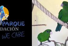 LPF News June 2016: Rare Purple-bellied Parrots bred at Loro Parque