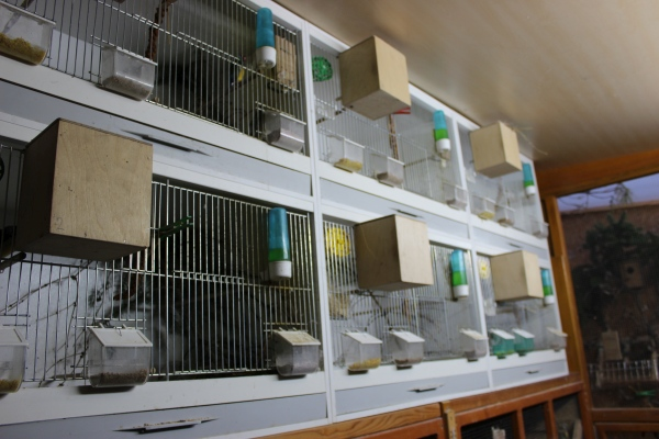 Finches aviary2