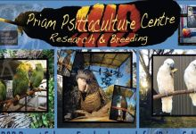 September news from Australian parrot breeding facility PPC PRIAM