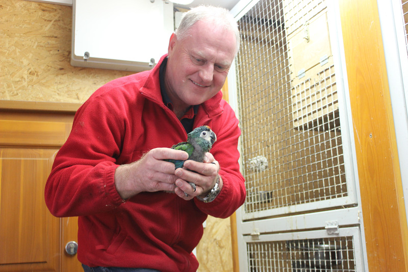 Zdenek with Blue-winged Macaw baby