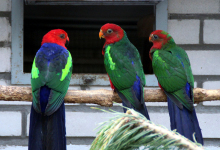 Report on the visit to Lubos Pavlech, parrot breeder from Slovakia