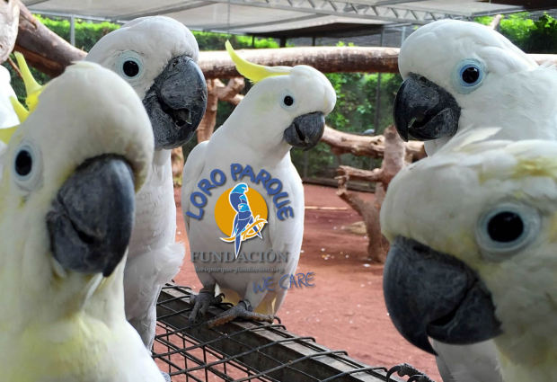 The new year has begun at Loro Parque Fundación