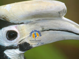 The Loro Parque Fundación has supported Philippine in-situ project with a total of USD 1,681,028