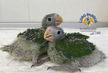 Outstanding breeding stock of 2017 at Loro Parque Fundación