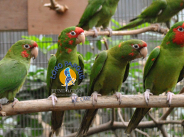 Parrot breeding and training at Loro Parque Fundación
