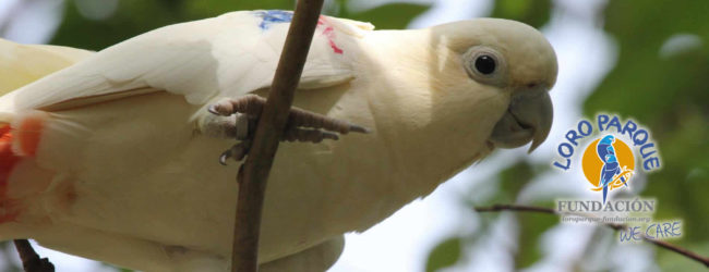 Loro Parque Fundación invests 1 million $ to conservation projects in 2019