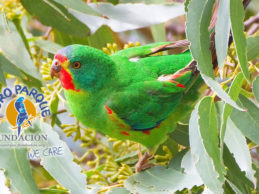 Compelling research and hi-tech nest-boxes help wild Swift Parrots