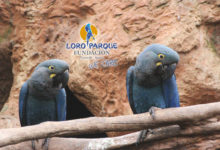 The costs and rewards of conserving the Lear's Macaw